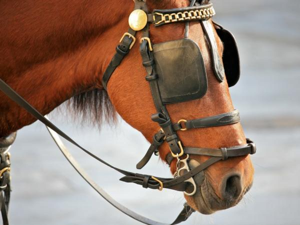 a-horse-wearing-blinkers